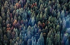 Gafas detectoras de estrés - Comprobación aérea en árboles