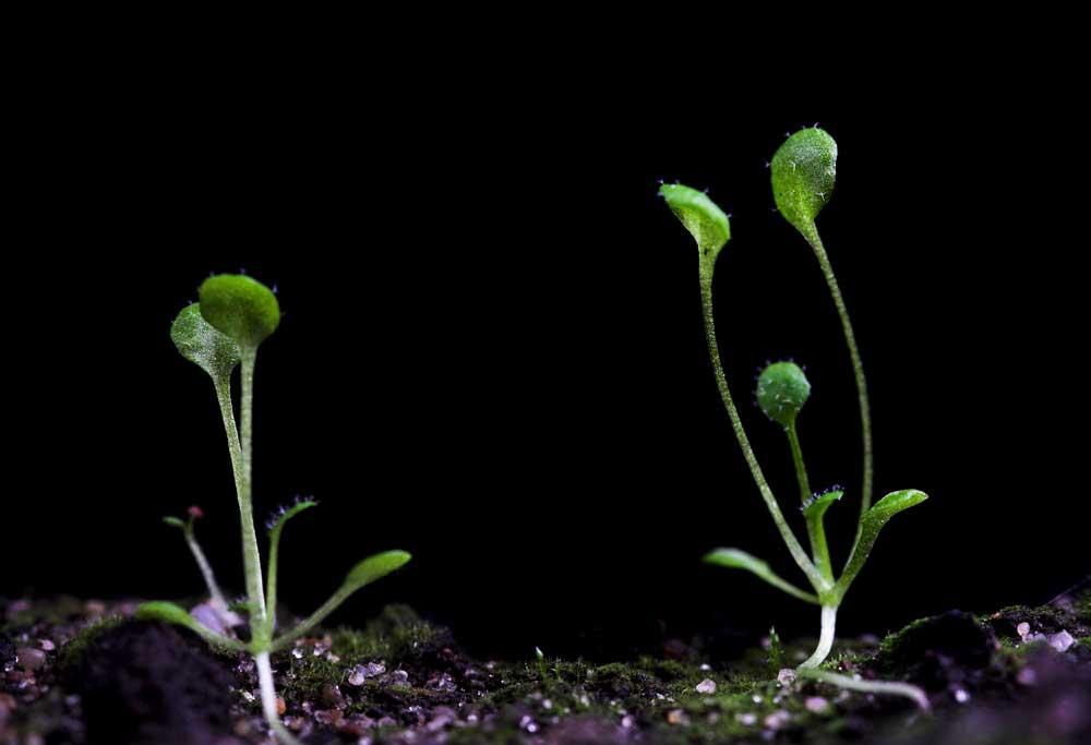 La NASA cultivará un vivero en la Luna el 2.015