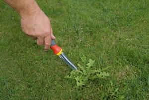 Herramientas para quitar malas hierbas de © Outils WOLF